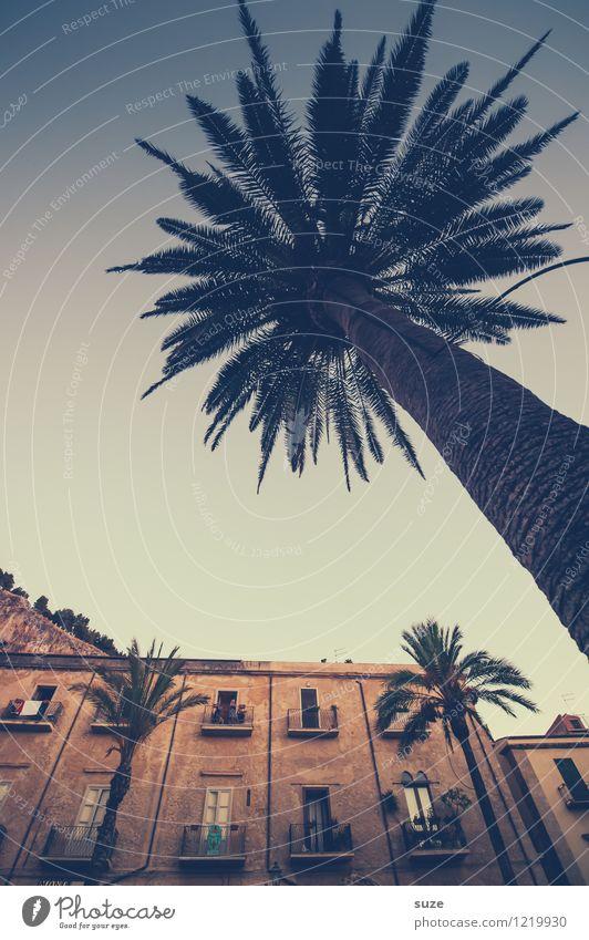 Angesehene Palme Ferien & Urlaub & Reisen Stadt alt Haus Fenster Reisefotografie Architektur Gebäude Fassade Tourismus Idylle Platz Italien Kultur Romantik Hoffnung