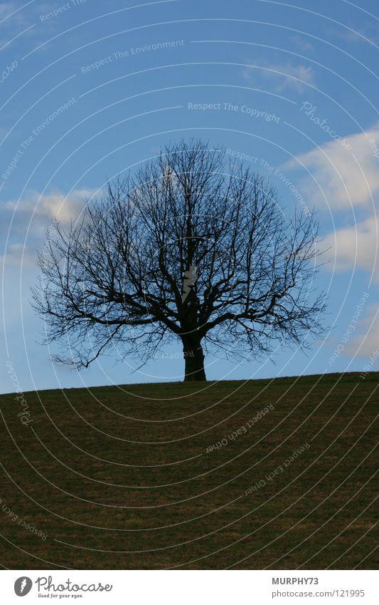 Der nackte Baum im blauen Himmel weiß grün Winter schwarz Wolken Wiese Gras Ast Vergänglichkeit Geäst Linde