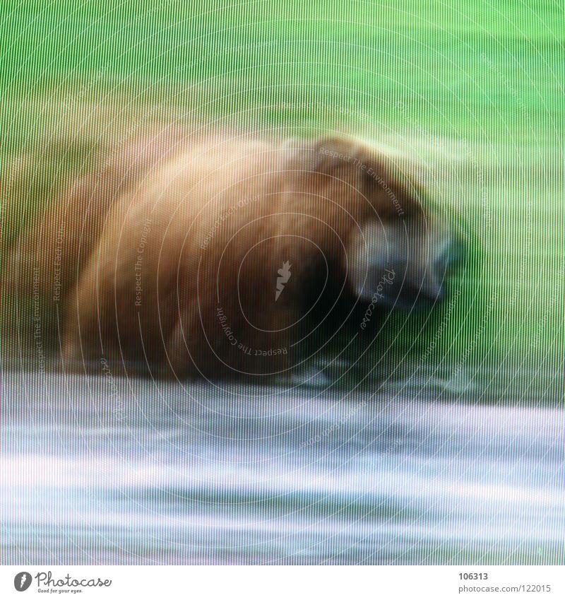 BEAR Natur blau Wasser grün rot Wiese Gras Stil See Kunst Wildtier außergewöhnlich wild Ausflug gefährlich Suche