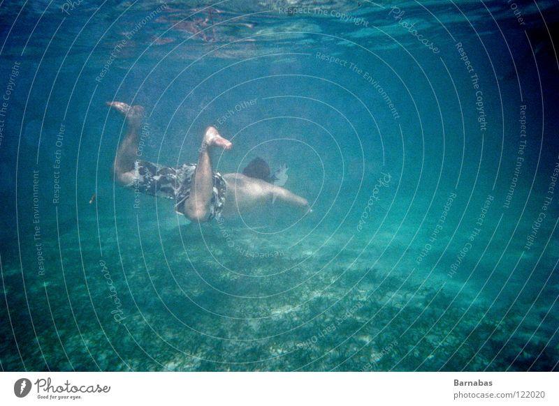 Fütterungszeit II Wasser Meer Schnorcheln