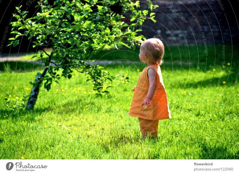 Wo ist sie nur? Kind Baum Sonne Sommer Einsamkeit Garten Suche niedlich Kleinkind Natur
