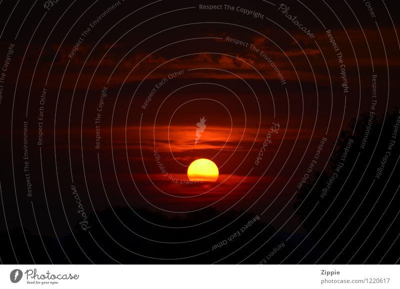 Lion King Himmel Natur schön Sonne Erholung rot Einsamkeit Wolken schwarz gelb Wärme Gefühle natürlich Glück Stimmung Horizont