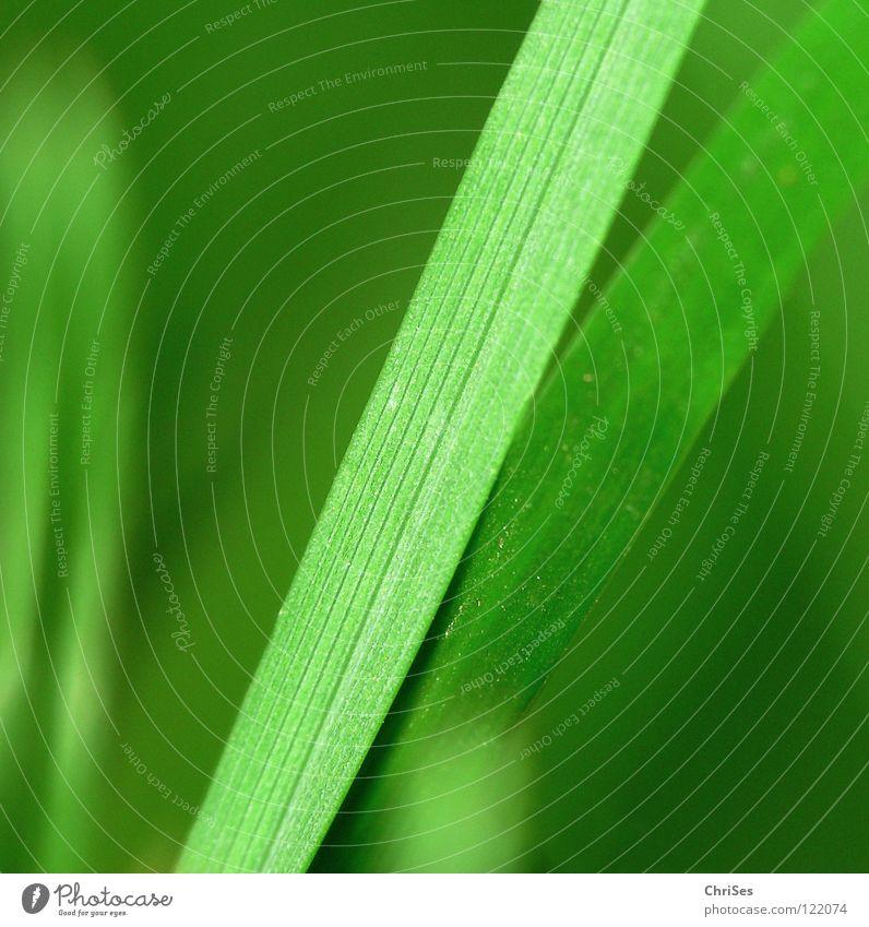 Zusammen : Grasgrün_05 Natur Pflanze Einsamkeit Wiese Gefühle Frühling klein Feld Wachstum Rasen Spitze Stengel Halm reduzieren