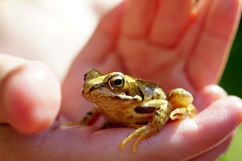 Froschn Tier braun wild beobachten berühren Schutz zart Umweltschutz umweltfreundlich Amphibie Froschkönig Froschauge