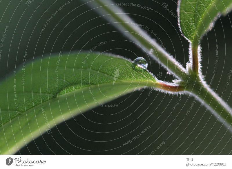Regen Natur Pflanze schön grün Sommer Blatt ruhig Frühling frisch elegant authentisch ästhetisch Blühend nass einfach