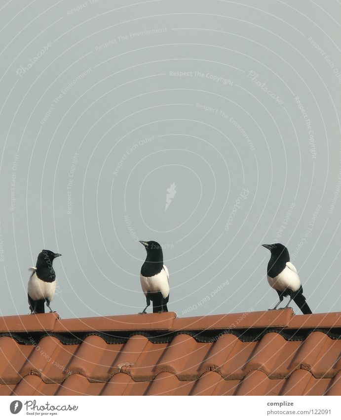Plan B Sommer Meer Tier Strand See 2 Vogel fliegen glänzend gold Luftverkehr Kommunizieren Feder Flügel planen fangen