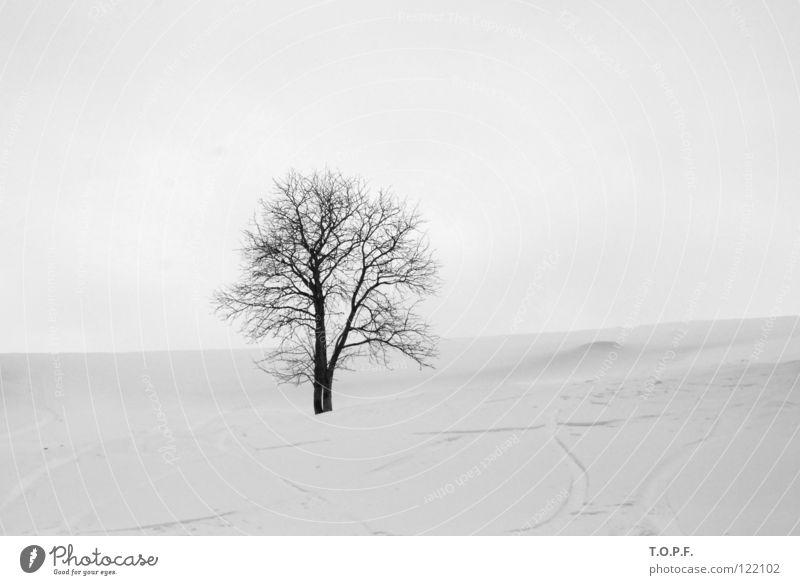 lonesome weiß Baum Winter ruhig Einsamkeit kalt Schnee Schneelandschaft
