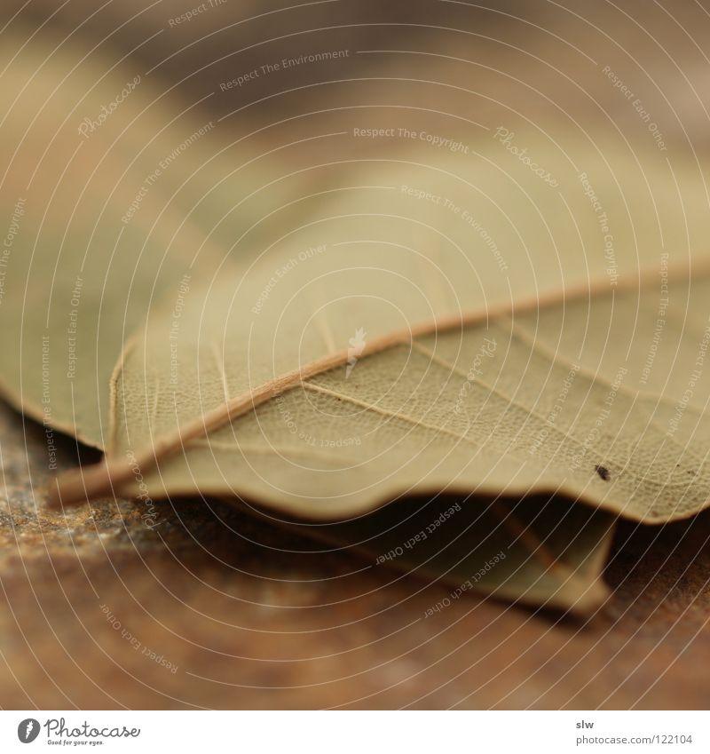 Lorbeerenblatt Baum grün Blatt Ernährung Kochen & Garen & Backen Kräuter & Gewürze lecker trocken Produktion Maserung Geschmackssinn Oliven verfeinern