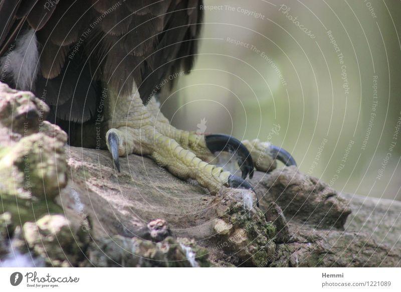 Adlerkrall Tier Vogel ästhetisch sportlich Zoo Pfote Krallen Landraubtier