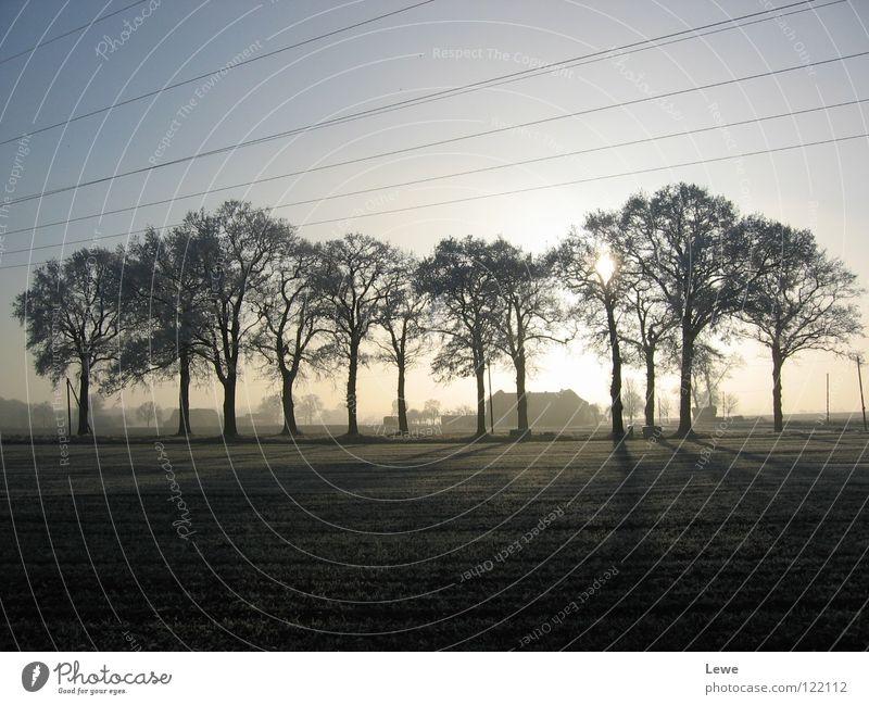 ländliche Wintermelancholie Himmel Baum ruhig schwarz Einsamkeit Ferne dunkel kalt Traurigkeit Landschaft Feld Trauer trist mehrere Kabel
