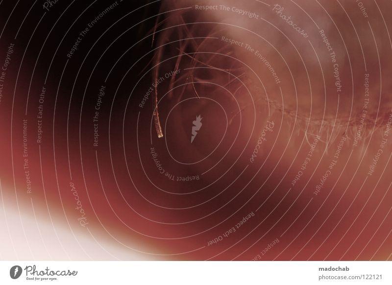 1111 schön Erholung Berge u. Gebirge Auge Leben außergewöhnlich Gesundheitswesen rosa träumen Haut fantastisch weich Romantik schlafen Freundlichkeit Gipfel