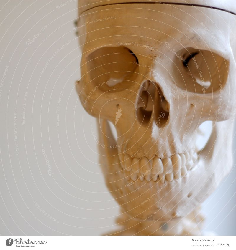 cranium Skelett fatal gruselig Horrorfilm Angst Halloween Biologie Wissenschaften Schädel Tod Zähne Kopf Anschnitt Detailaufnahme Bildausschnitt