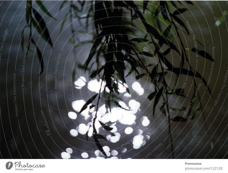 daydreaming Wasser Baum Blatt Weide hängen Zweig Trauerweide