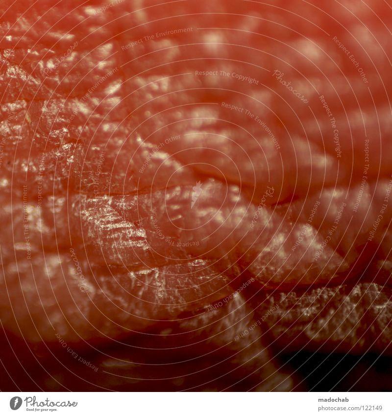 LIPPENBEKENNTNIS Lippen nah Makroaufnahme Anatomie Gesundheitswesen Leben organisch Organ Sinnesorgane trocken rot Fleisch roh Dermatologie Biologie Mensch