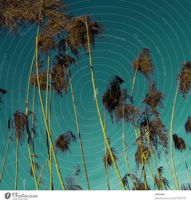 ::24 BUSCHELWÜSCHEL:: Natur Himmel Gras Fluss Stengel Palme