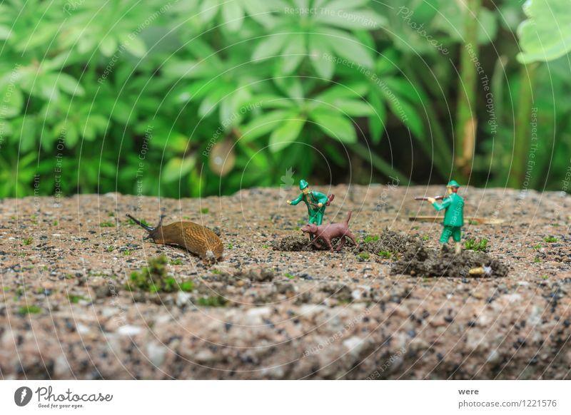 Schneckenjäger Natur Pflanze Blume Tier Architektur Frühling Garten Ziel Spanien Jagd Umweltschutz Fressen krabbeln langsam Biotop zielstrebig