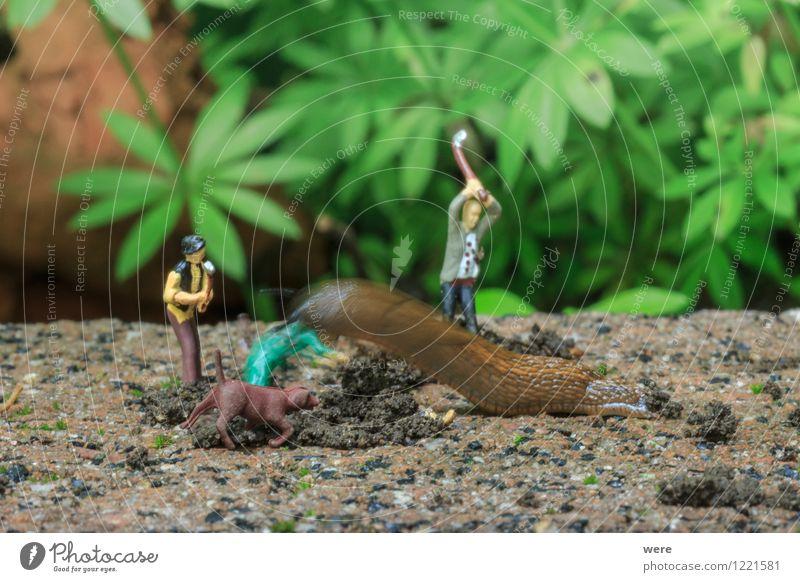 Schneckenjagd - das Opfer Natur Pflanze Blume Tier Architektur Frühling Garten Ziel Spanien Jagd Umweltschutz Fressen krabbeln langsam Biotop zielstrebig