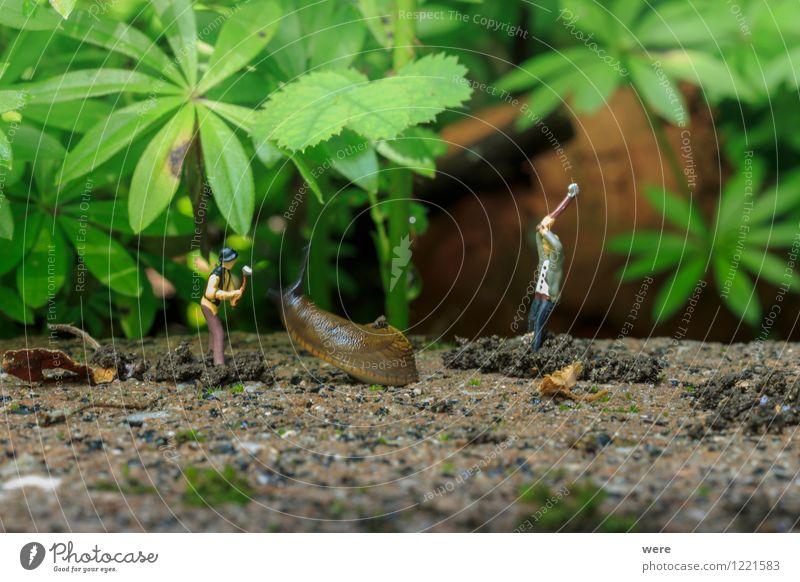 Schneckenjagd - der Angriff Natur Pflanze Blume Tier Architektur Frühling Garten Ziel Spanien Jagd Umweltschutz Fressen krabbeln langsam Biotop zielstrebig