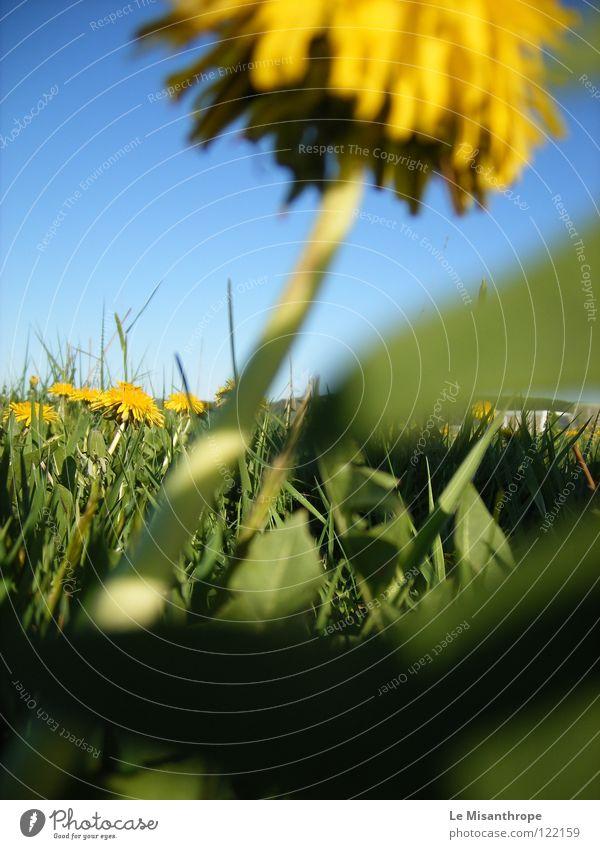 blumig. Natur Blume grün gelb Erholung Wiese Gras Frühling Glück Wärme Zufriedenheit Deutschland frei Erde Europa nah