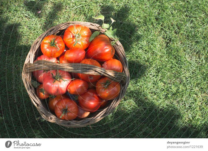 Tomaten im hölzernen Korb auf grüner Wiese Natur Pflanze Sommer Sonne rot Blatt natürlich Essen Garten Menschengruppe Frucht frisch groß Gemüse Ernte