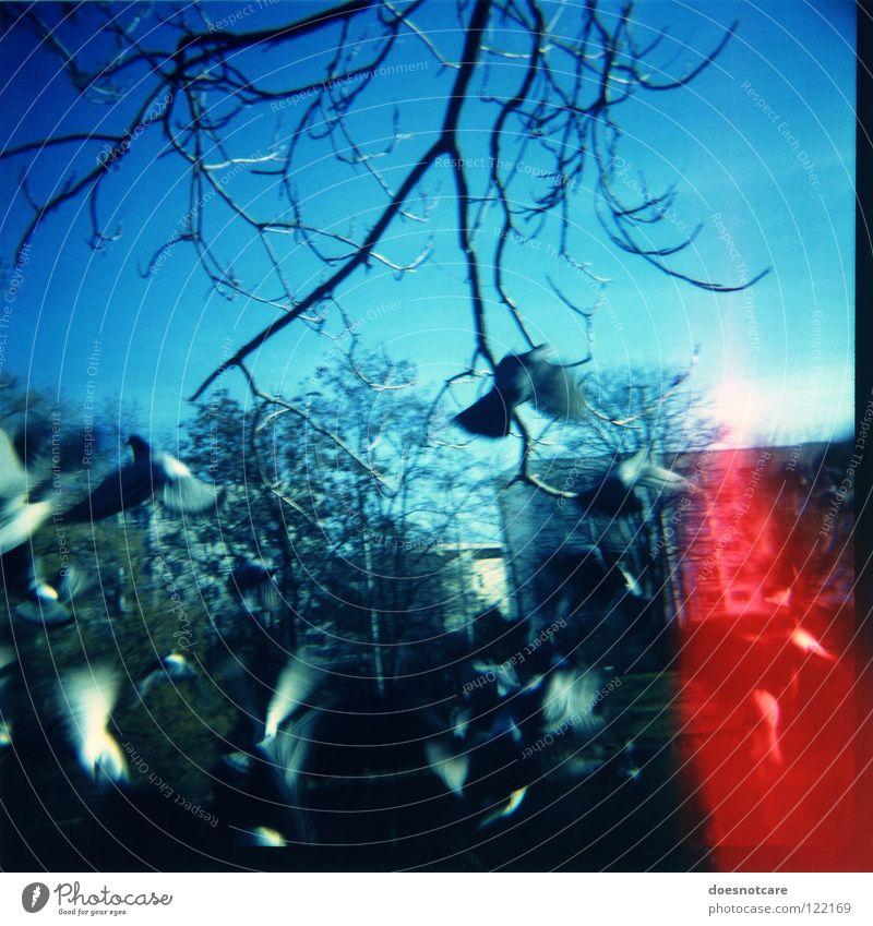 Columbiformes Fluchtverhalten. blau rot Tier Vogel Angst fliegen Luftverkehr Leipzig Panik Taube Vogelschwarm Light leak