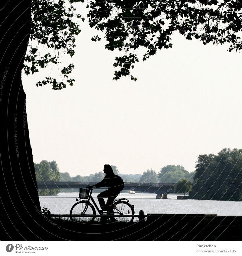 Münsteraner Eingeborene Frau Wasser Baum Sommer Blatt dunkel Küste See Fahrrad Freizeit & Hobby Brücke Zaun Baumstamm Münster Wochenende Speichen