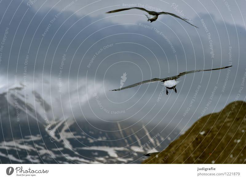 Island Himmel Natur Ferien & Urlaub & Reisen Landschaft Wolken Tier kalt Umwelt Berge u. Gebirge Leben natürlich Küste fliegen Stimmung Vogel wild