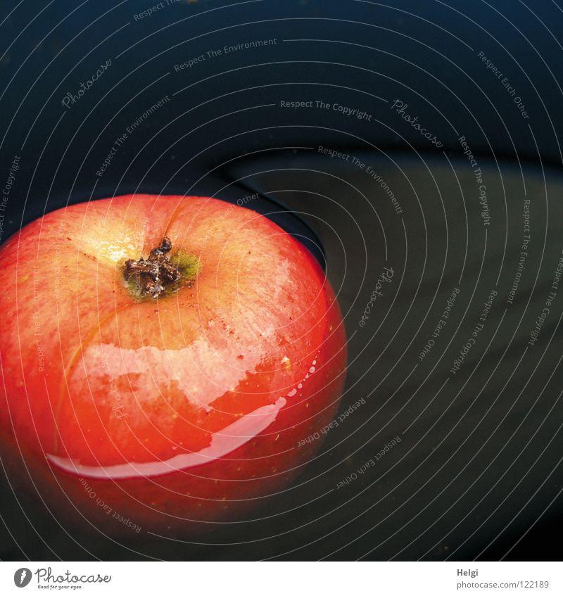 roter Apfel schwimmt im Wasser Fass fallen nass tauchen lecker süß saftig rund gelb braun schwarz Blüte Färbung Licht Reflexion & Spiegelung Linie knackig