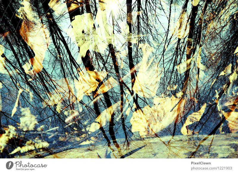 Herbstwald Natur Ferien & Urlaub & Reisen blau Baum Einsamkeit Landschaft Blatt Wald Leben Stil außergewöhnlich Kunst Park Design träumen