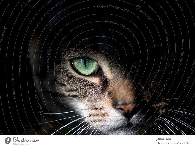 Boden- und Ackertag | Feldjäger Garten Wiese Tier Haustier Katze Tiergesicht Fell Schnurrhaar Auge Katzenauge Nase 1 entdecken fangen Jagd Blick warten