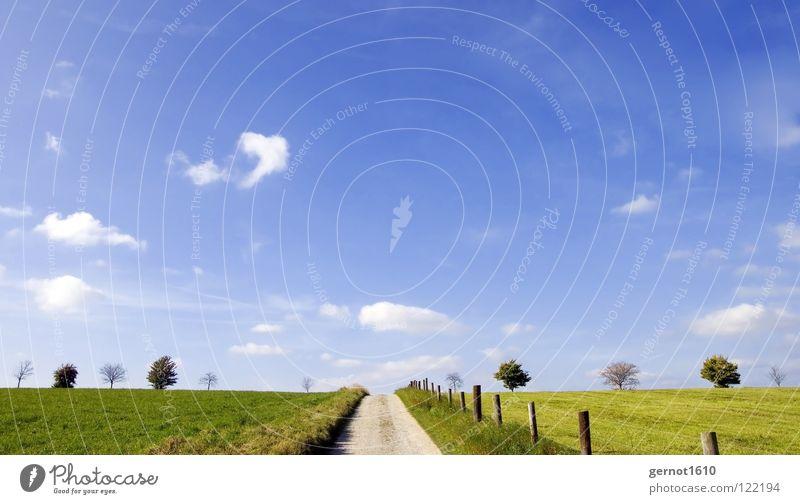 Dem Himmel entgegen Baum Licht Luft Wolken Unendlichkeit Horizont grün weiß Zaun Wiese ökologisch Erholung wandern Freude Herbst schön Freiheit Ferne blau