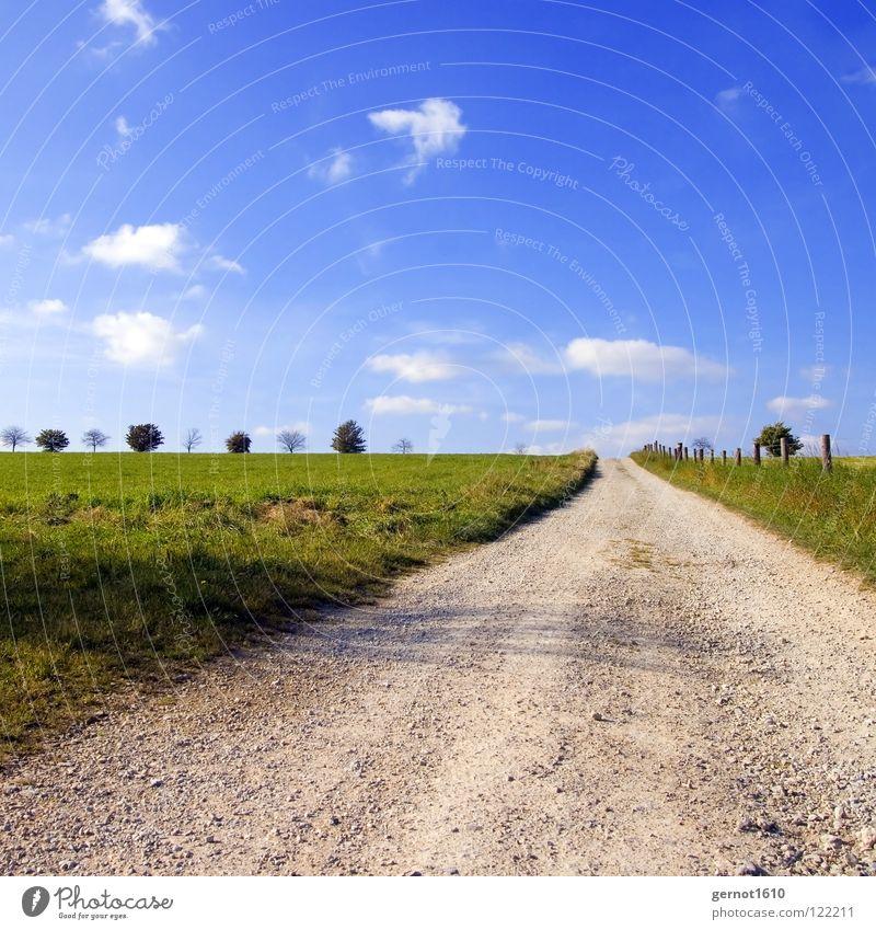 Der Weg Baum Licht Luft Wolken Unendlichkeit Horizont grün weiß Zaun Wiese ökologisch Erholung wandern Herbst schön Himmel Freiheit Ferne blau Wege & Pfade