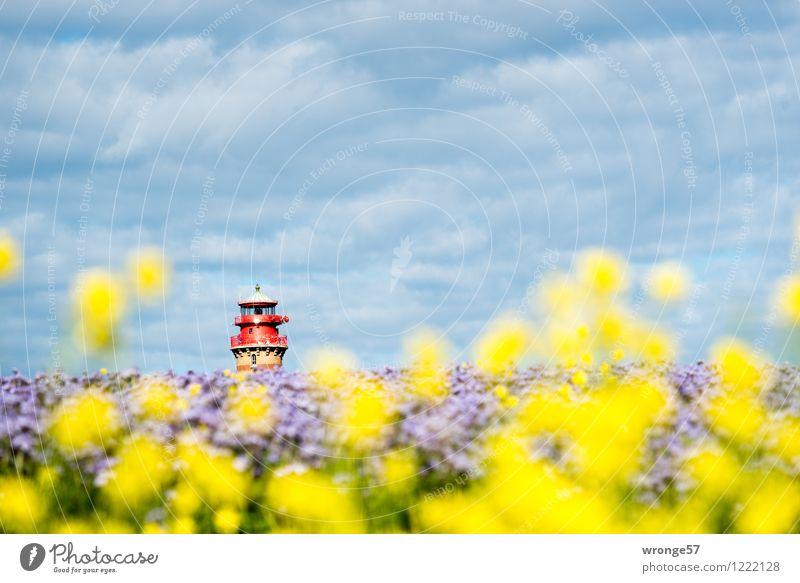 Inselfarben Umwelt Landschaft Pflanze Himmel Horizont Sommer Schönes Wetter Blüte Nutzpflanze Raps Bienenfreund Feld schön blau mehrfarbig gelb violett rot