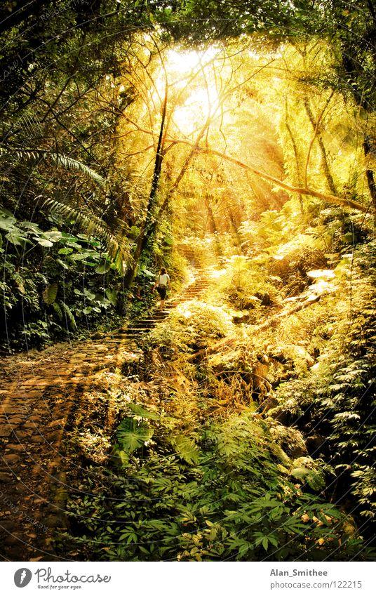 a morning in the jungle Urwald Wald Licht Sonnenlicht Sonnenstrahlen Taiwan sun sunlight sunbeams rainforest Beleuchtung ray rays