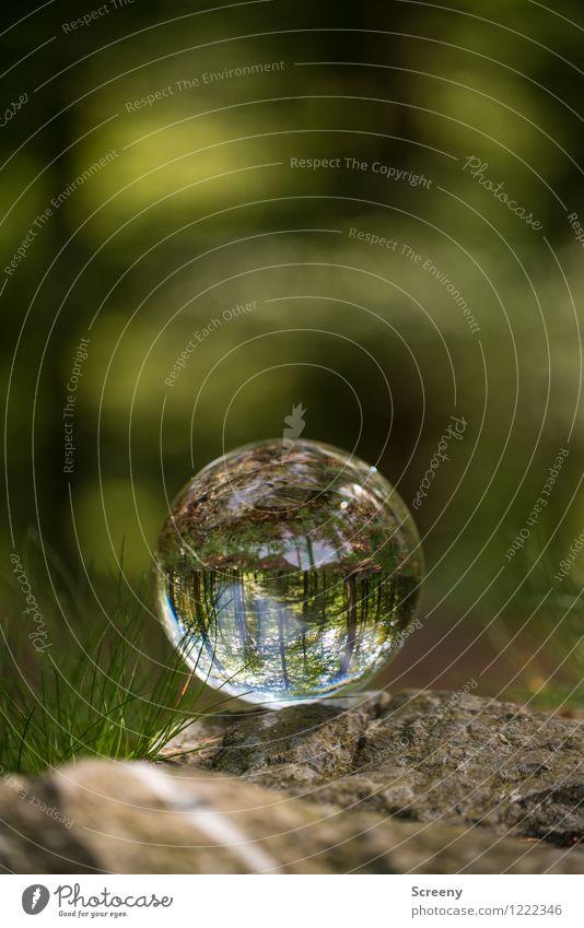 Welten #8 Natur Landschaft Pflanze Frühling Sommer Schönes Wetter Wald Eifel Hohes Venn Kristallkugel Glaskugel Stein rund braun grün ruhig Idylle Wege & Pfade
