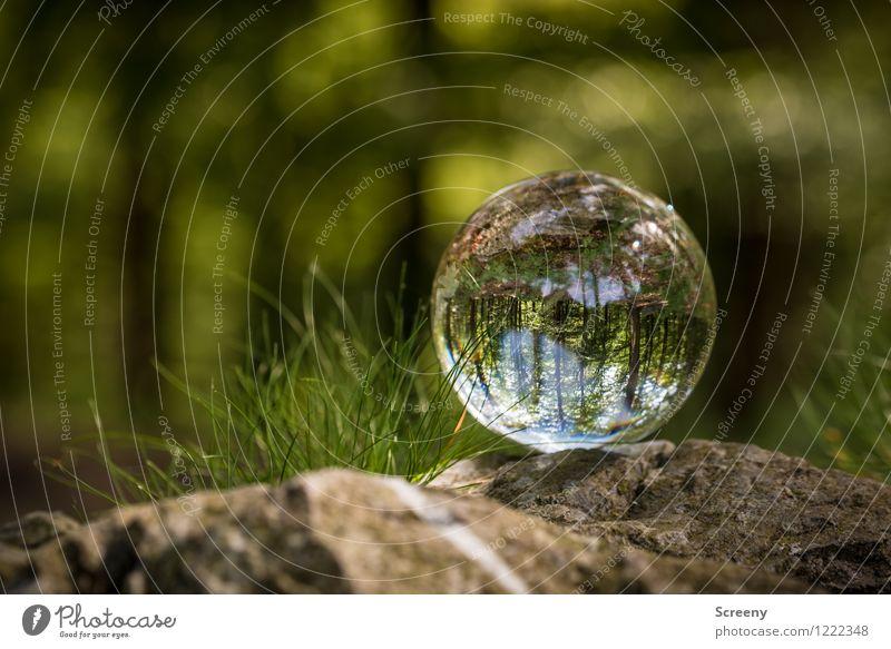 Welten #10 Natur Pflanze grün Sommer Baum Landschaft ruhig Wald Frühling Gras Wege & Pfade Stein braun Idylle Glas Sträucher