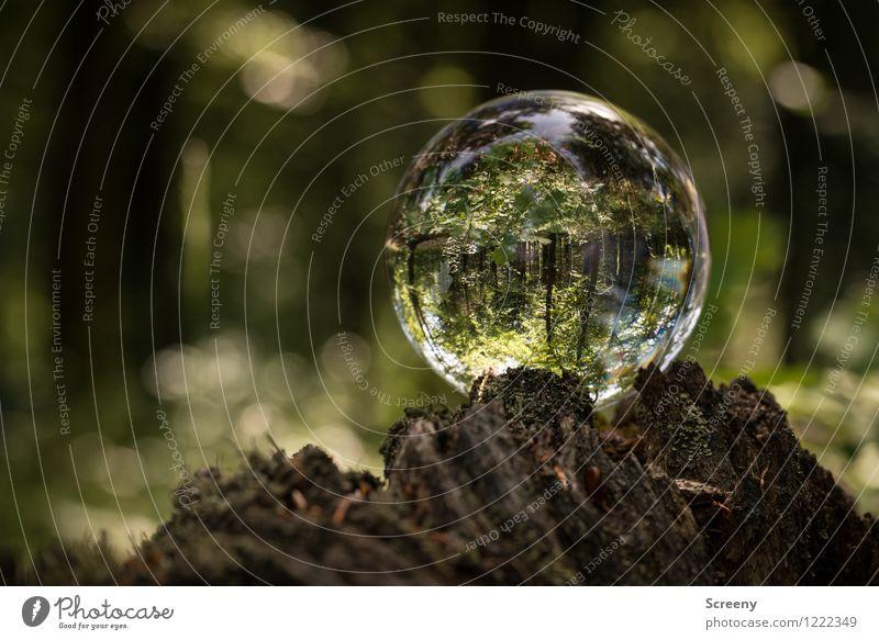 Worlds #9 Natur Pflanze grün Sommer Baum Landschaft ruhig Wald Frühling Wege & Pfade Holz braun Idylle Glas Sträucher Schönes Wetter