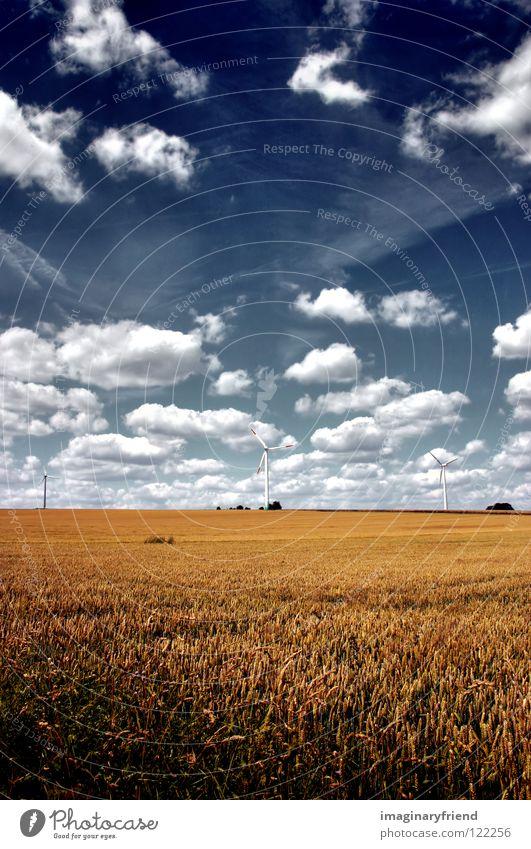 feld mit windrädern Feld Kornfeld Landwirtschaft Gerste Weizen Roggen Sommer Wolken Himmel Länder Elektrizität Wissenschaften Kraft Getreide Landschaft clouds