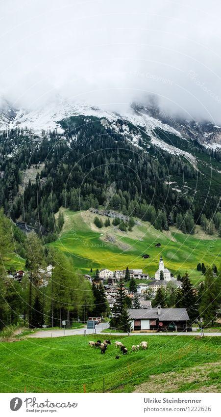 Typisch Schwyz Ferien & Urlaub & Reisen Tourismus Ausflug Berge u. Gebirge wandern Umwelt Natur Landschaft Frühling Nebel Baum Wald Alpen Schneebedeckte Gipfel