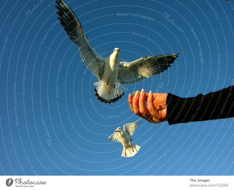 Möwenflug Schnabel Futter füttern Vogel Küste Meer Strand Hand Finger Fingernagel Ferien & Urlaub & Reisen Frau feminin Flügel Ostsee Maniküre Erholung
