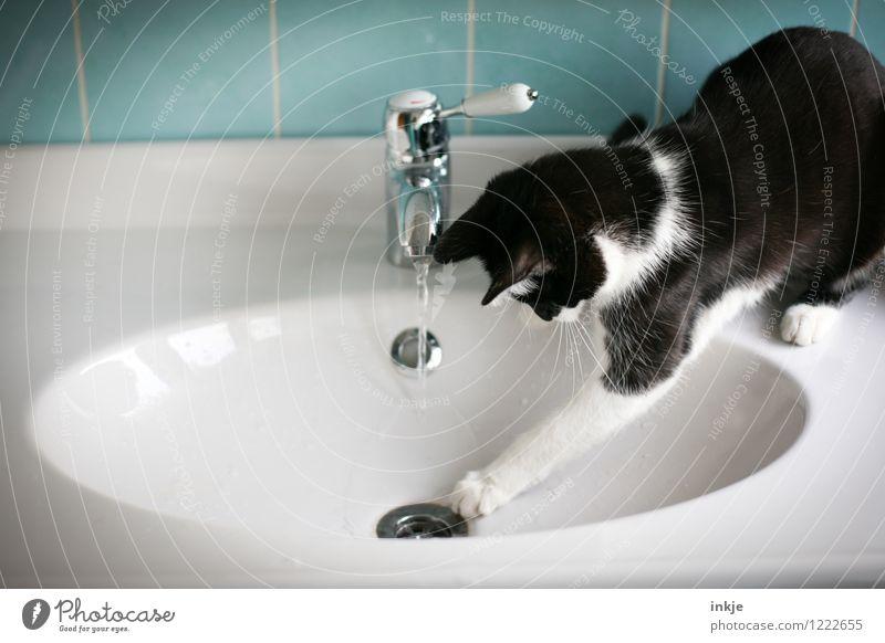 Katzenleben - am Ende siegt die Neugierde Lifestyle Freude Freizeit & Hobby Häusliches Leben Bad Haustier 1 Tier Tierjunges Wasserhahn Waschtisch Waschbecken