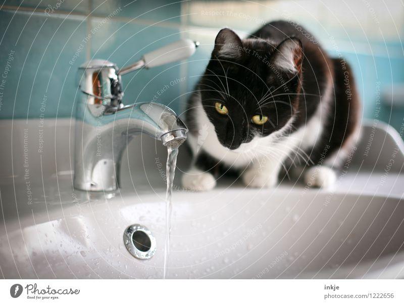 Katzenleben - Hypnose Lifestyle Häusliches Leben Bad Haustier Tiergesicht 1 Tierjunges Waschtisch Wasserhahn Waschbecken beobachten hocken Blick Neugier