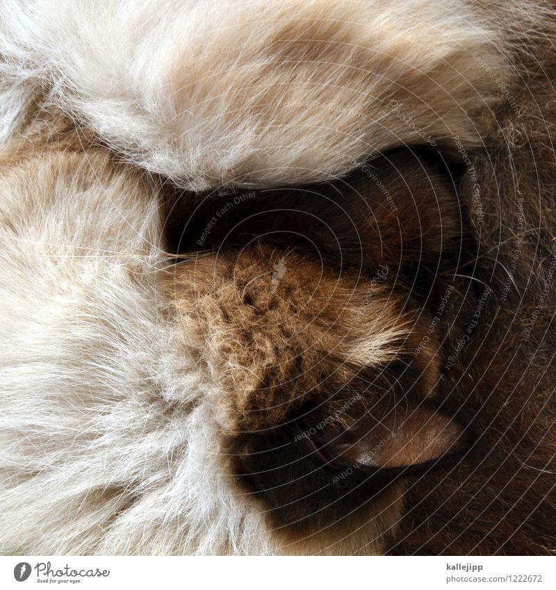 katze aus vogelperspektive Tier Haustier Katze Fell 1 schlafen Hauskatze Ohr Fellfarbe Haare & Frisuren ruhig zusammengerollt Farbfoto Gedeckte Farben Licht