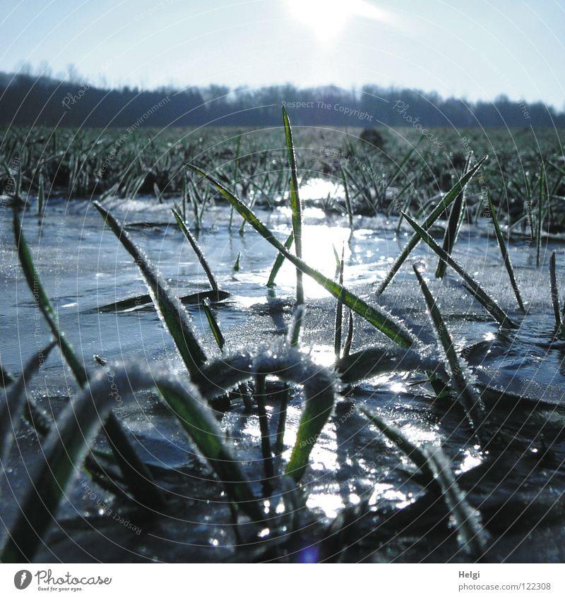 Grashalme mit Raureif auf einer Wiese mit gefrorener Pfütze Herbst Winter kalt Eiskristall frieren Morgen Sonnenaufgang Halm glänzend schimmern Licht Wolken