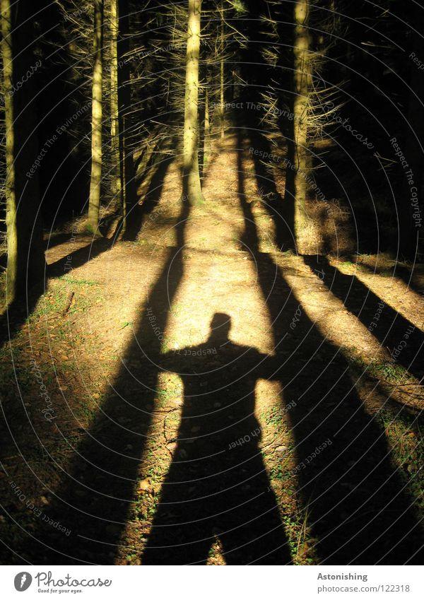 der Schatten-Baumfäller Mann Sonne Wald Holz Wege & Pfade Linie Bodenbelag Mitte Waldboden Asymmetrie