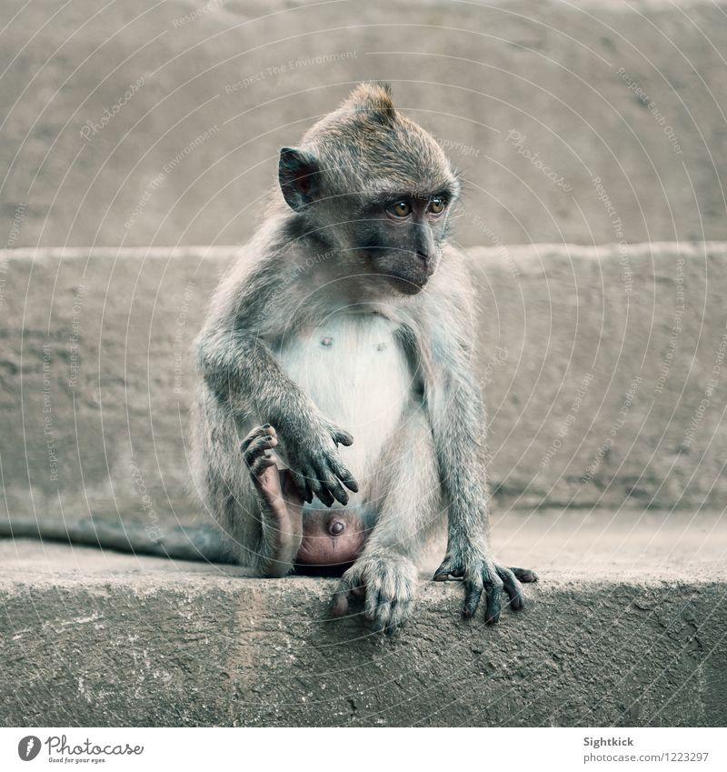 Little Mojo Tier Tiergesicht 1 Stein Beton niedlich grau Ferien & Urlaub & Reisen Umwelt Affen Farbfoto Außenaufnahme Tag Tierporträt