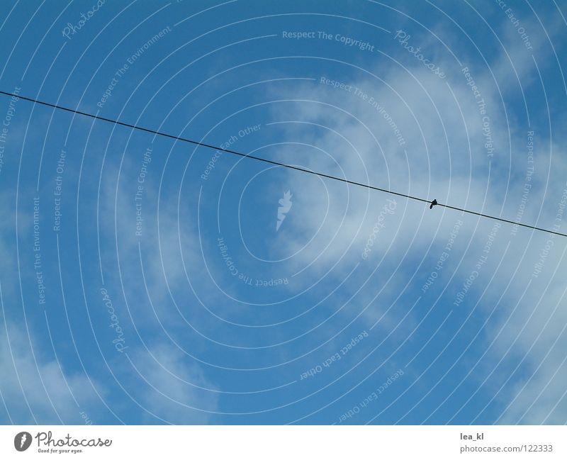 Der Knoten im Himmel weiß Wolken Elektrizität Schnur diagonal quer Sommer blau Leitung Kabel