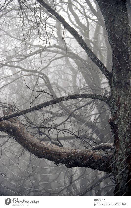 foggy woods #4 Natur Baum Winter Einsamkeit Wald dunkel kalt Traurigkeit Nebel nass Frost gruselig gefroren feucht Zweig