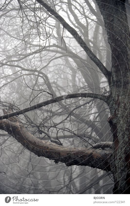 foggy woods #4 Nebel Einsamkeit kalt dunkel Baum Winter Wald feucht nass gefroren Natur Nebelstimmung Nahaufnahme Baumrinde gruselig cold tree trees baeme Frost