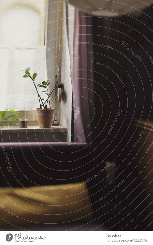 zu hause . Häusliches Leben Raum Wohnung Fenster Zimmerpflanze Vorhang dunkel Traurigkeit